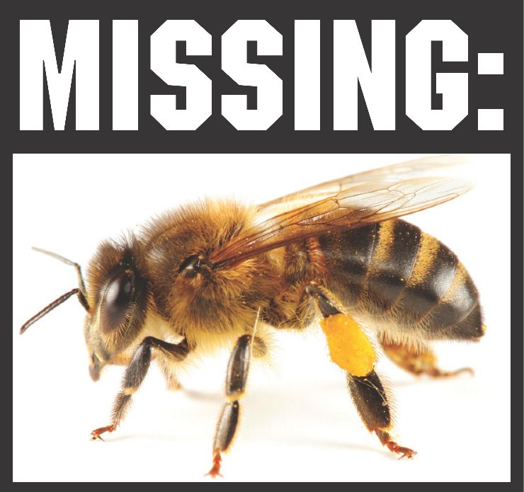 honey bees dissaperance Honey bees would not disappear entirely, but the cost of honey bee pollination services would rise, and those increased costs would ultimately be passed on to consumers through higher food costs.
